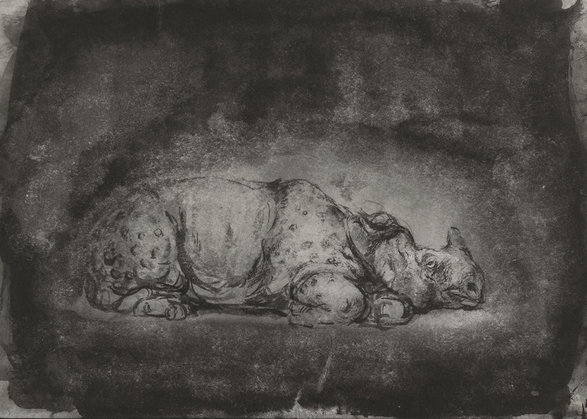Ofer Josef Rhinoceros 2 2019