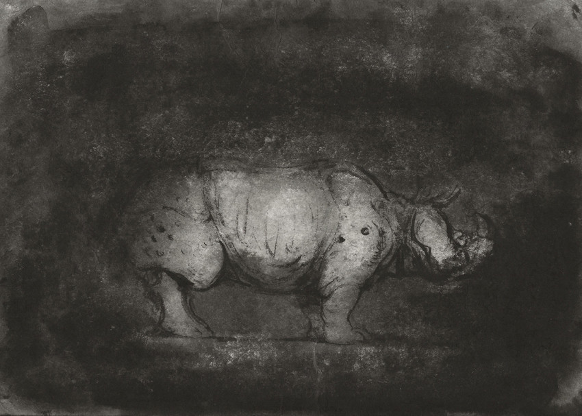 Ofer Josef Rhinoceros 3 2018